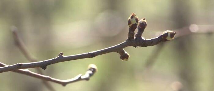 Zatravljivanje voćnjaka i vinograda